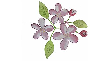 Flor de Bach Desaliento